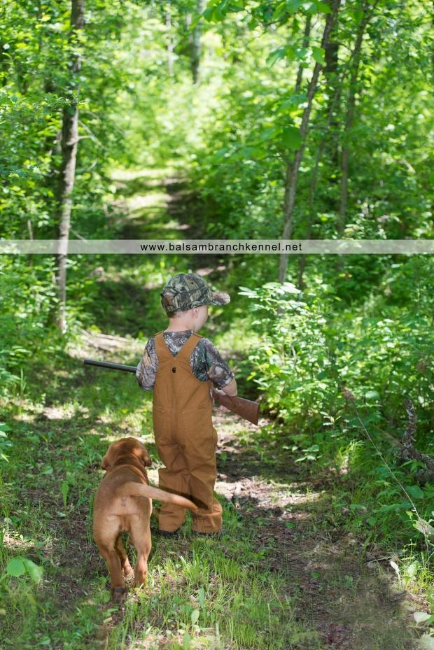 fox red lab balsam branch kennel o2