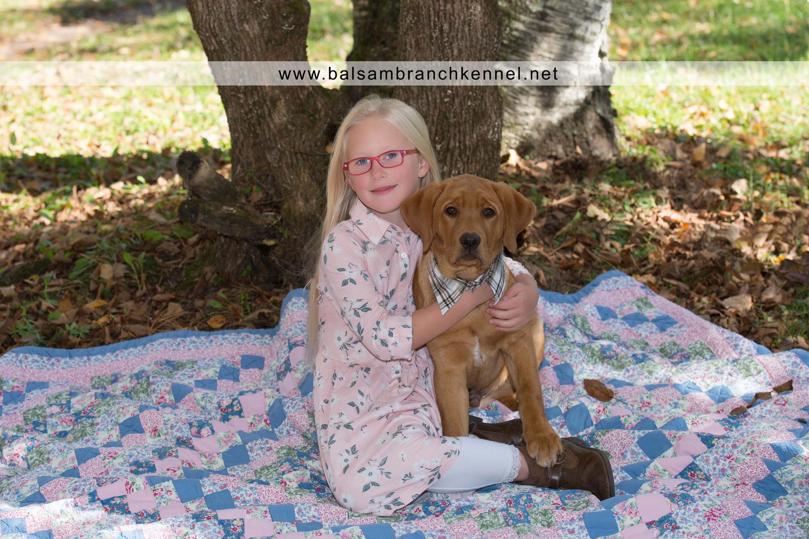 Teddy Fox Red Lab Puppy 4 Months Old Balsam Branch Kennel 1 Copy Balsam Branch Kennel