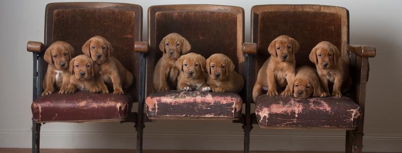 Roxy & Okie 2019: Six Week Old Puppies – Balsam Branch Kennel