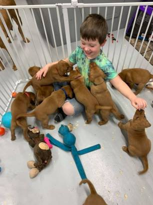 Fox Red Lab Puppy Balsam Branch Kennel Puppies For Sale Puppy Play Time
