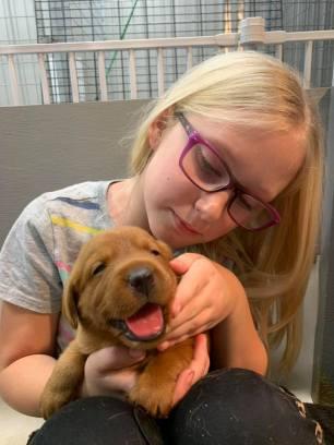 Fox Red Lab Puppies For Sale Balsam Branch Kennel Millie Okie 2019 14